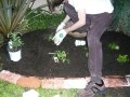 Gardening at Night